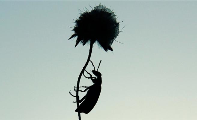 AB karar verdi: Böcek yenebilir mi?