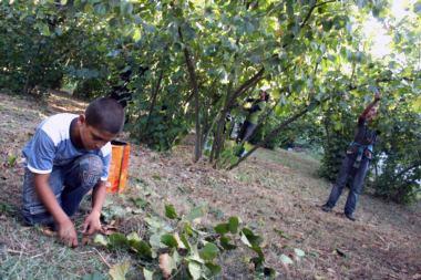 Tarımda çocuk işçi çalıştırılmasına son