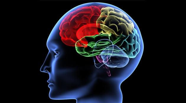 Beyinle ilgili önemli bir teori çürütüldü