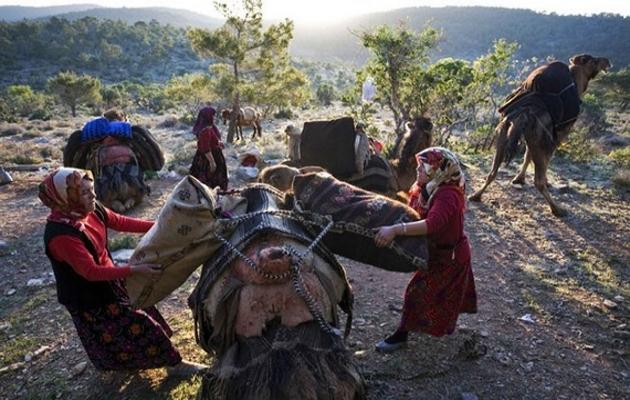 Sarıkeçililerin dönüş çilesi başladı-FOTO