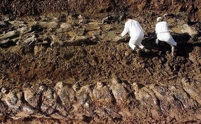 Bosna'da bir toplu mezar daha bulundu