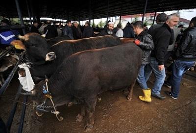 Elde kalan kurbanlıkları Et ve Süt Kurumu alacak