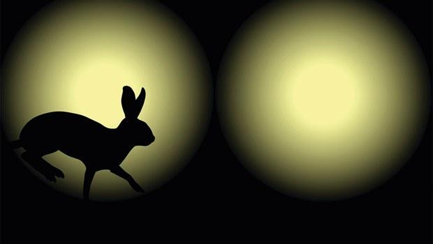 Erzincan'da projektörle tavşan avlayanlara ceza
