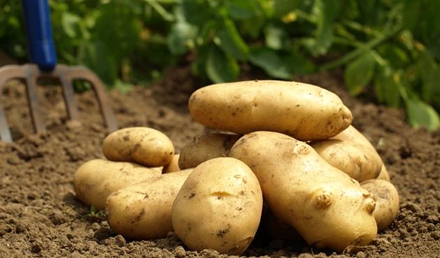 Depolardaki fasulye ile patates çıkıyor