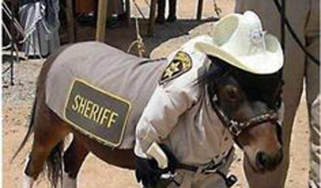 Mısır'da atına asker kıyafeti giydiren çiftçiye hapis