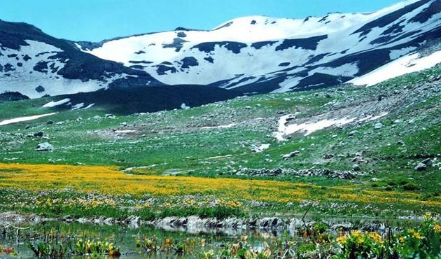 Hakkari dağları 'fıstık açacak'