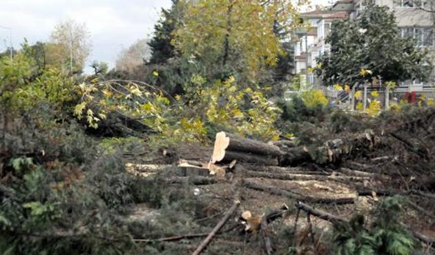 Yalova'daki ağaç katliamında sessizlik | Foto
