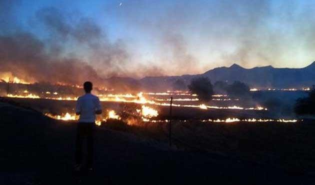 Diyarbakır ve Mersin'de büyük orman yangınları