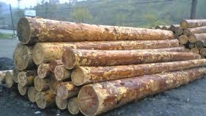 Myanmar'da ağaç kesen 153 Çinliye müebbet