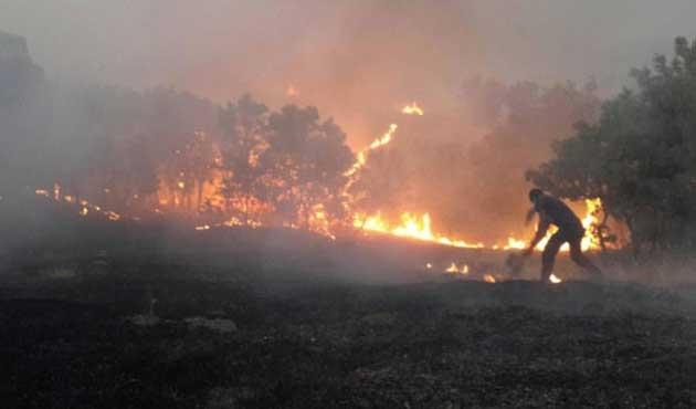 Lice'de bir yangın daha çıktı