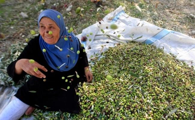 Lübnan'da 'Zeytin Kardeşliği'