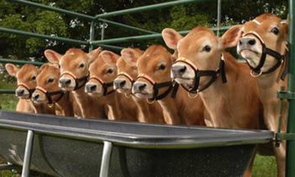 Çin hayvan klonlamayı ticarete döküyor