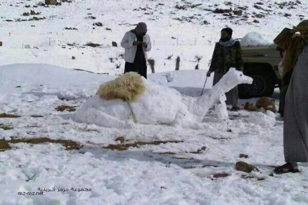 İlk kez kar gören Hicazlılar 'kardan deve' yaptı | FOTO