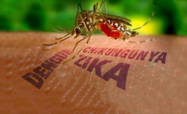 Zika Avustralya'ya ulaştı