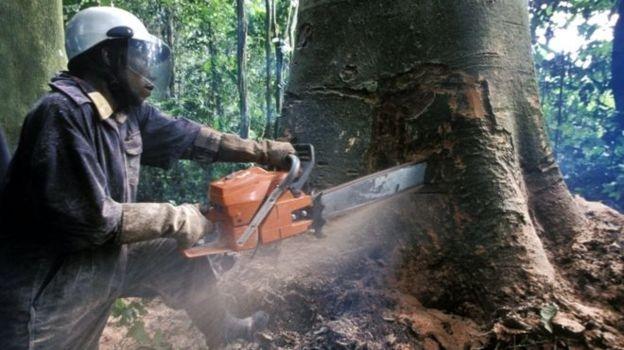 İklim anlaşması doğal hayatı katledecek