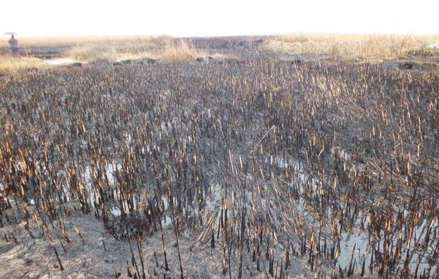 Göksu deltasında 150 dönüm yandı