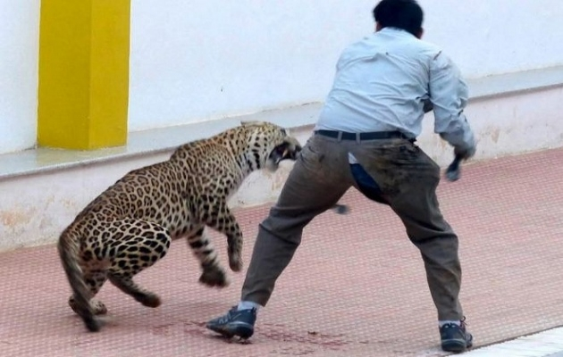 Hindistan'da leopar okula saldırdı