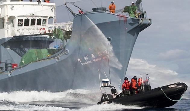 Antarktika'da balina katliamı
