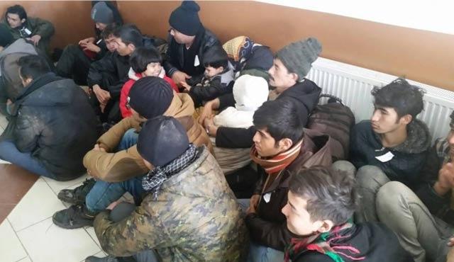 Aydın'da 50 sığınmacı yakalandı