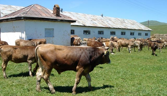 Besi hayvan ithalatı ESK'na verilecek