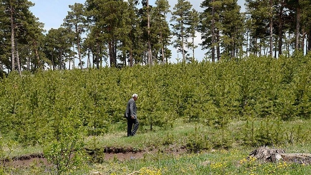 Tek bir köy dokuz milyon fidanı toprakla buluşturdu