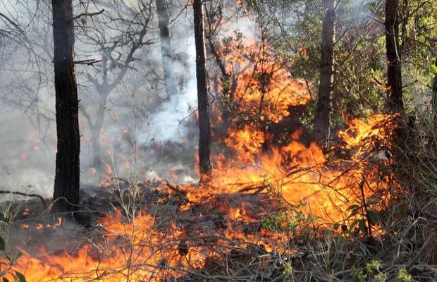 Mersin'deki yangın atış poligonuna ilerliyor