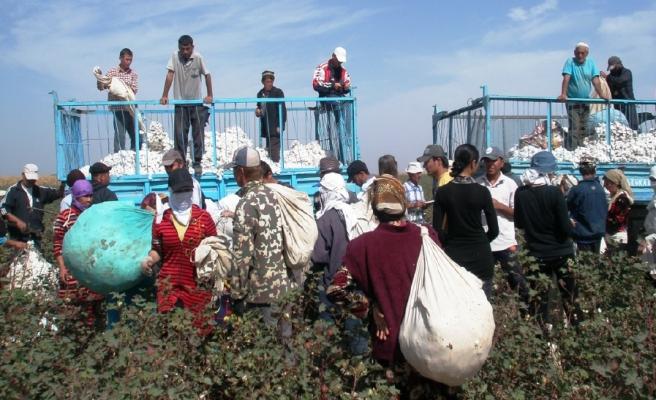 Özbek imamlar: Pamuk toplamak vaciptir!