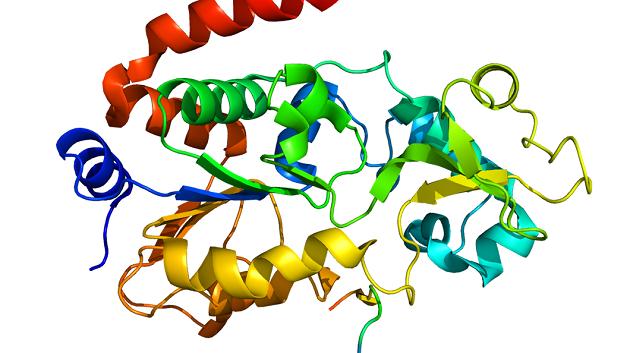 Kalp atışlarını düzenleyen hücreler geliştirildi