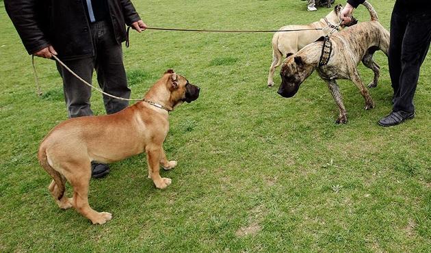 Tehlikeli köpek besleyen kişiye 16 bin lira ceza