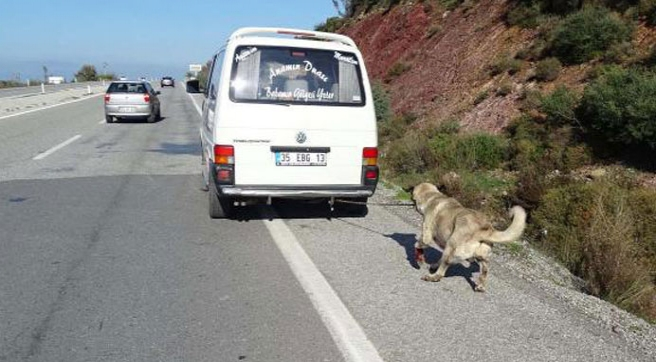 Köpeğe işkence yapana çifte ceza