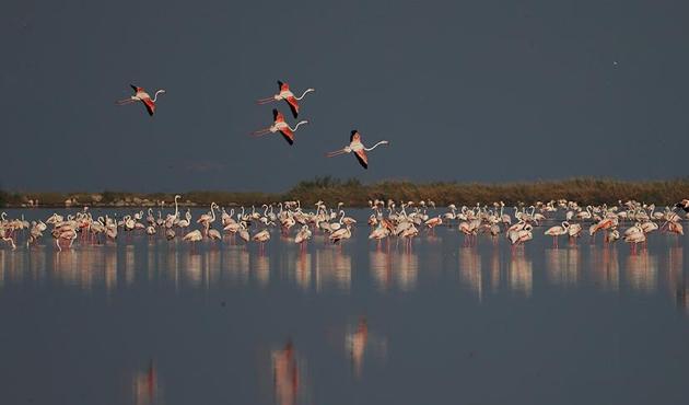 Flamingolardan Beyşehir'de görsel ziyafet