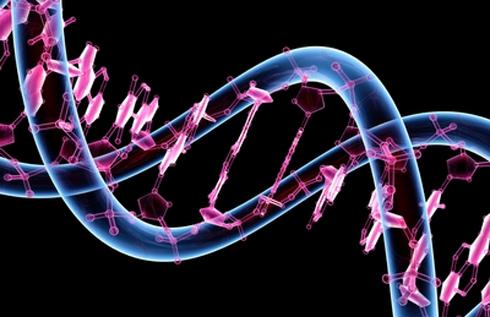 Genetik şifreler cüzdana girecek