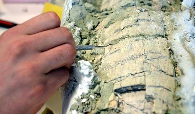 Güney Kutbu'nda yeni böcek türü fosili bulundu