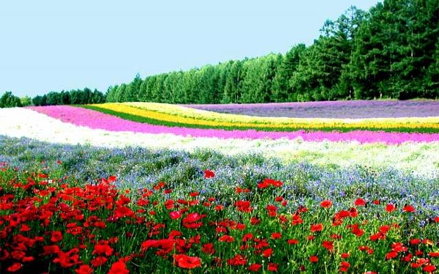 Bitkiler büyüme evresinde ses çıkarıyor