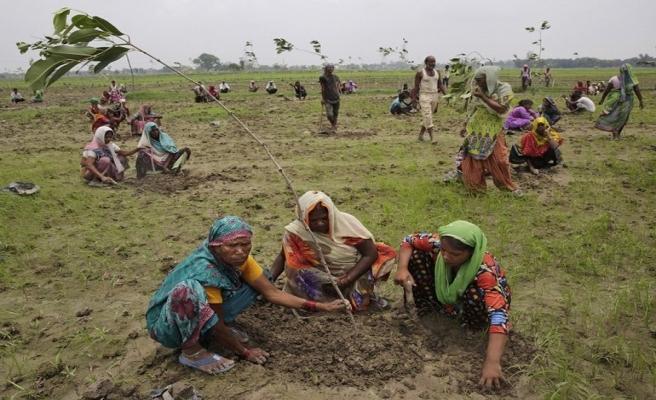 Hindistan'da 24 saatte 50 milyon ağaç dikildi