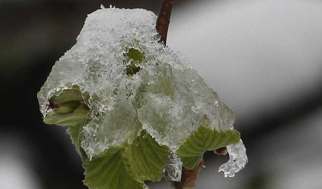 Meteoroloji'den yedi il için zirai don uyarısı