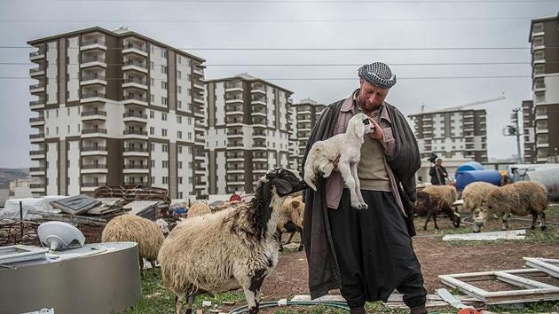Şehirli çoban | FOTO