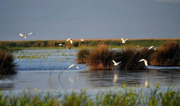 Doğu Karadeniz'de 26 bin 826 su kuşu tespit edildi