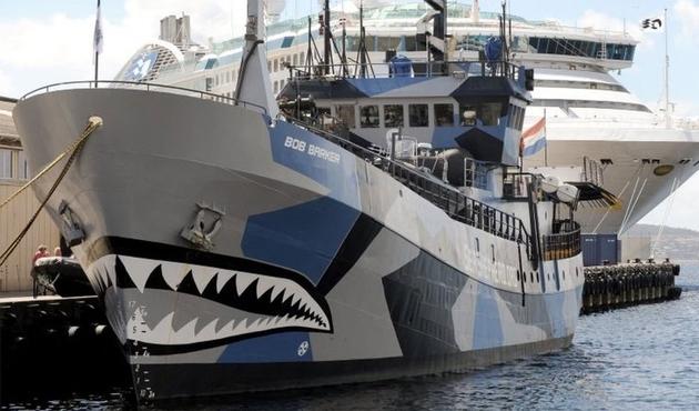 Deniz Çobanı, Japon balina avcılarını takibi bıraktı