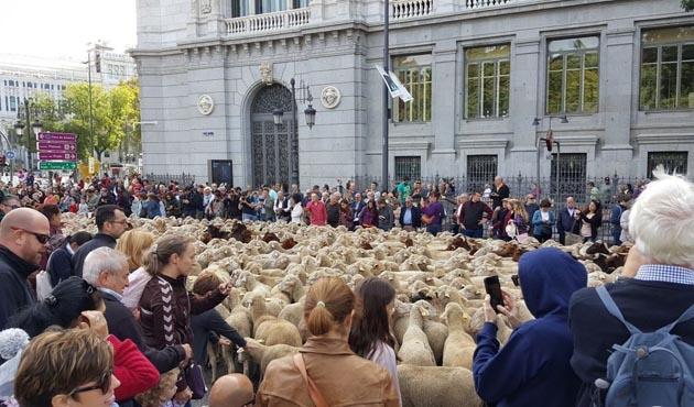 Madrid'de koyun çobanları onurlandırıldı
