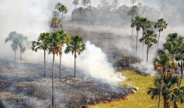 Brezilya'da milli parkta yangın