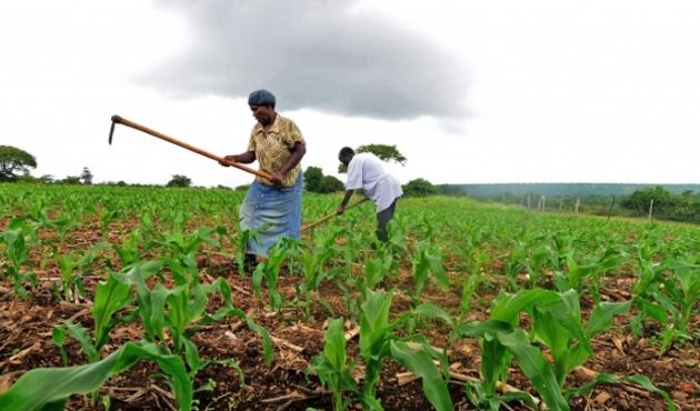 TARIMKON, Çad hükümetine destek verecek