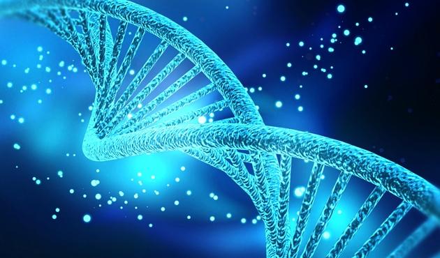 'Sıradan' deri hücresinden 'doğurgan' kök hücre üretildi