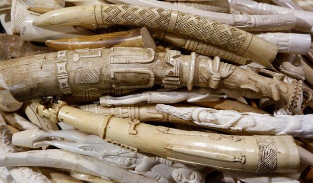 Japonya, yasa dışı fil dişi ticareti iddiasını reddetti