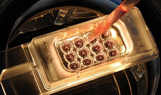 Laboratuvar ortamında ilk kez insan yumurtası geliştirildi