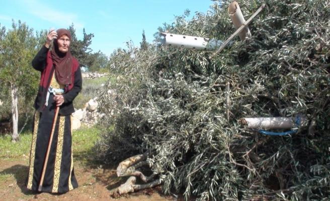 İsrail askerleri Batı Şeria'da Nekbe faaliyetine müdahale etti
