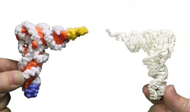 RNA ile hafıza transferi yapıldı