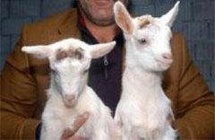 'Tüp Keçiler'Üremeye Başladı