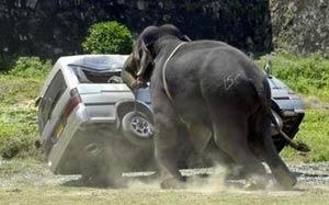 Kızgın filler minibüsleri ezdi