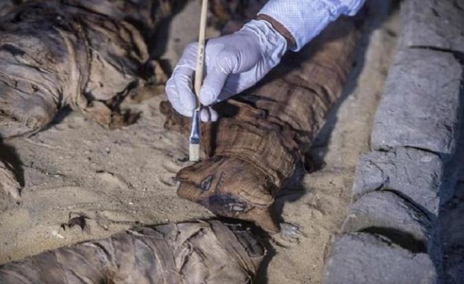 Mısır'daki kazılarda kedi mumyaları bulundu